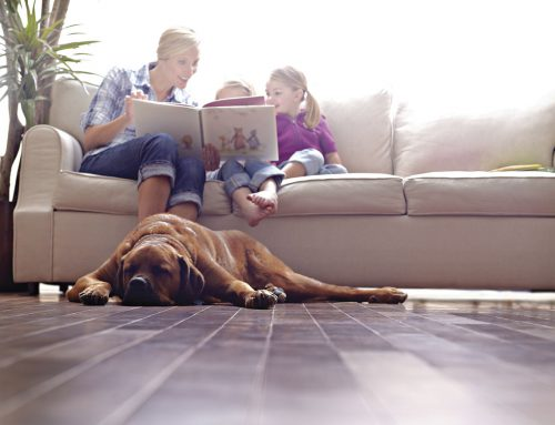 Geklebtes Parkett punktet auch bei Haustierbesitzern – Wohlfühlboden für Hund und Katz'